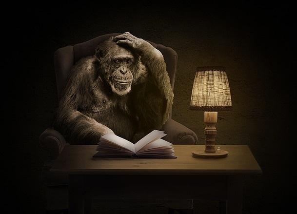 Chimpancé sentado en una butaca junto a una mesa en la que hay un libro abierto, para simbolizar la civilización de primates avanzada de la saga del planeta de los simios